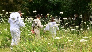 3 pupils in beekeeping suits walk across wildflower meadow