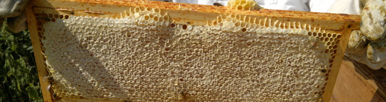 More than 40% of beekeepers say they had a better honey harvest in 2019
