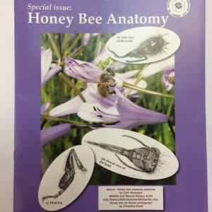 BBKA News – Honey Bee Anatomy