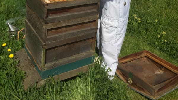 National Hive Count 2020