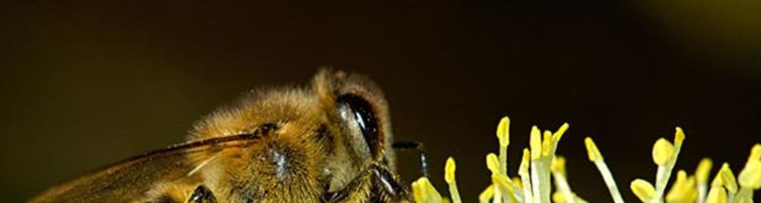 30 NGOs including BBKA send Pollinator letter to European Commission