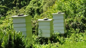 Find beekeeping near You