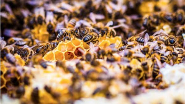 What other things do bees make besides honey?