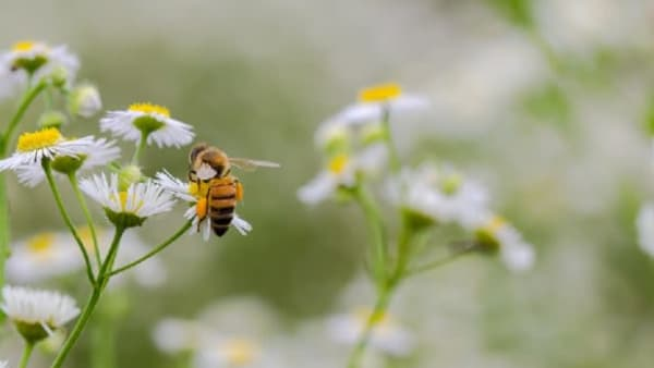 Defra publishes blog about bee importation row