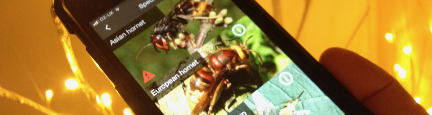 New app to help beekeepers and public identify Asian Hornets
