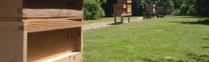 Apiary and Education