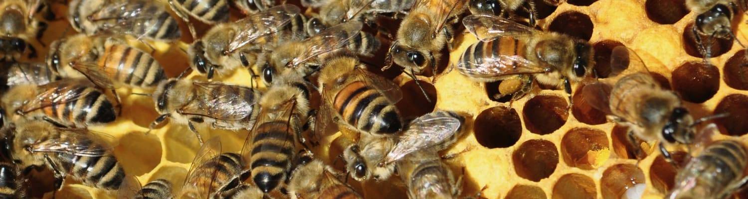 bees-in-the-news