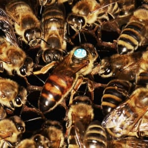 Honey Bee Health Course - Darlington - Sunday 22nd March 2020