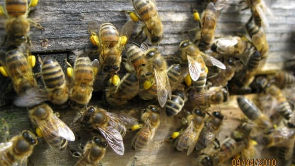 Defra Survey about training for beekeepers and bee farmers