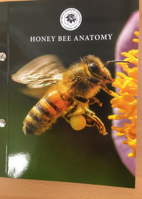 Honey Bee Anatomy Acetates - NEW