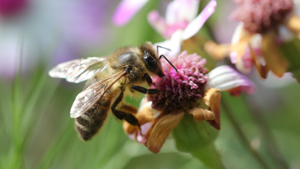 Online data base of pollinator interactions