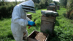 Tending Hives during Covid-19