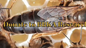 Donations from the BBKA Spring Convention for Beekeeping Research